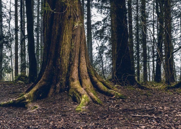 Preservar áreas verdes do país é consciência